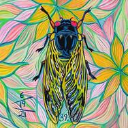 Cicada no. 38