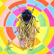 Cicada 15