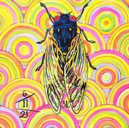Cicada no.31