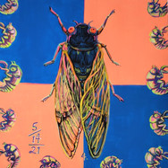Cicada4_edited.jpg