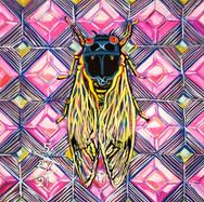 Cicada no. 17