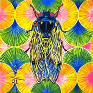 Cicada no. 29