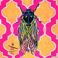 Cicada no. 40