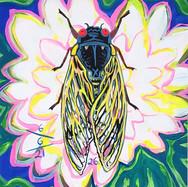 Cicada no. 26