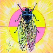 Cicada no. 22