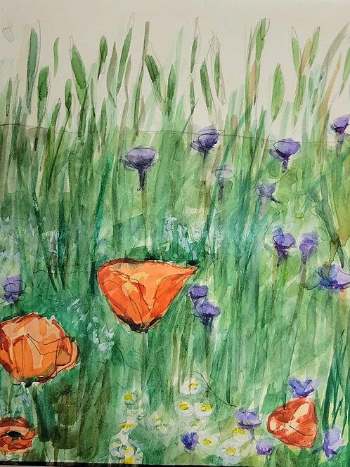 Poppy Wildflower fields