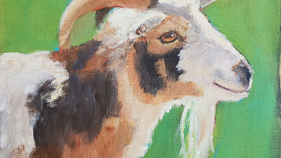 Goat profile - acrylic painting demo PAG 3-1-21