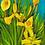 Thumbnail: And the wild Iris blooms