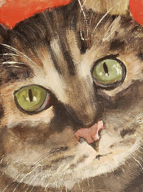 Kitty Closeup