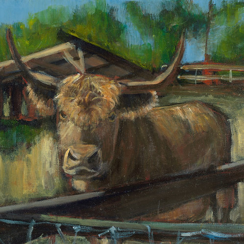Scottish Cow Cocoa animal pal print - 4 x 4 inches