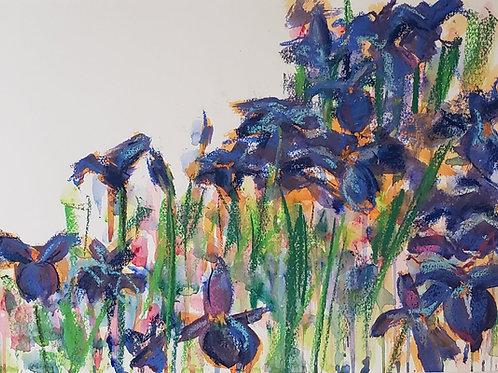 """Iris Fields - 17x21.5"""""""