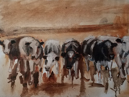 School of cows - 9 x 12 inches