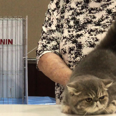 Cat Show Video#01