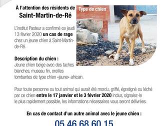 L'Institut Pasteur confirme un cas de rage chez un chien de type croisé détenu à Saint-Martin-de-Ré,