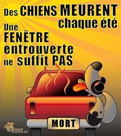 Des chiens meurent chaque été dans les voitures