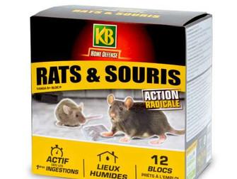 Raticide, un risque sournois pour nos poilus.