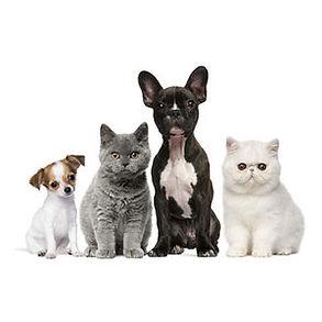 behance_wellness_pets.jpg