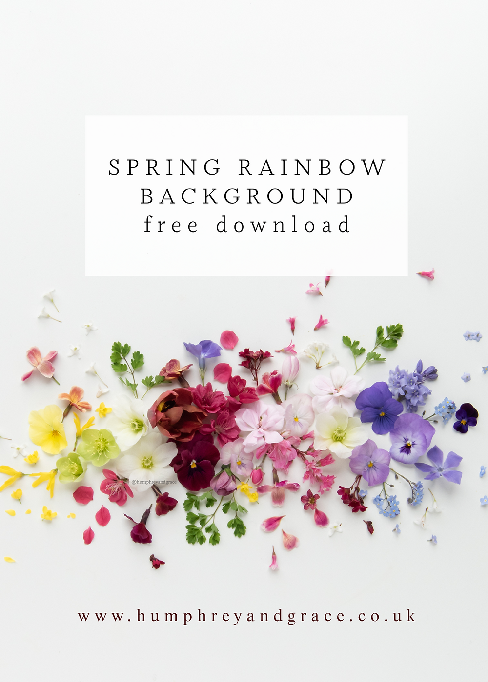 Rainbow flowers on a white background