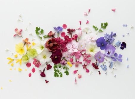 rainbows - free download