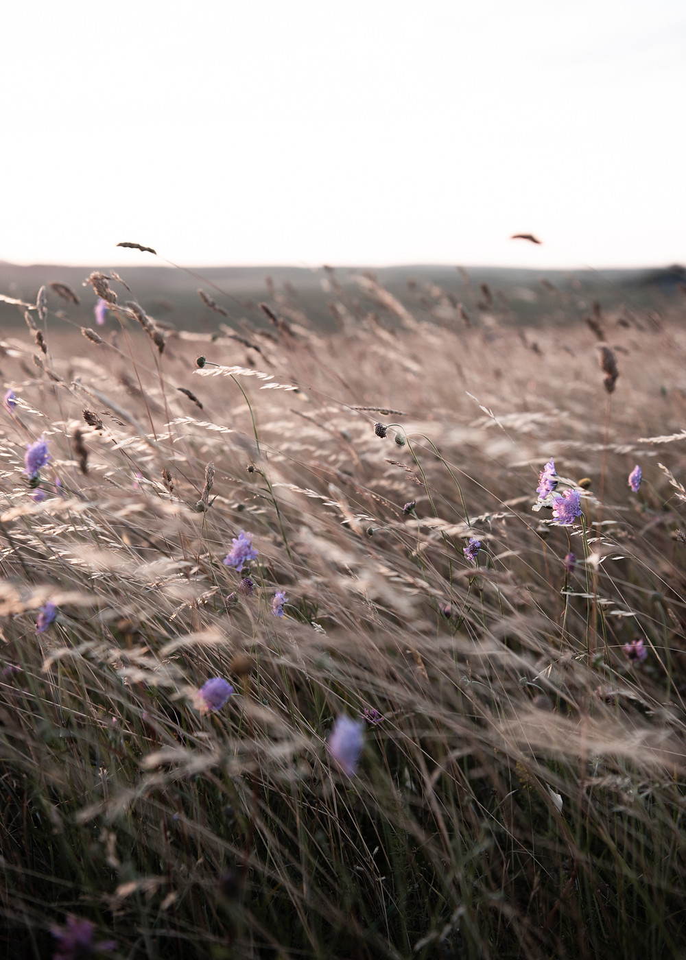 photographing wild flowers