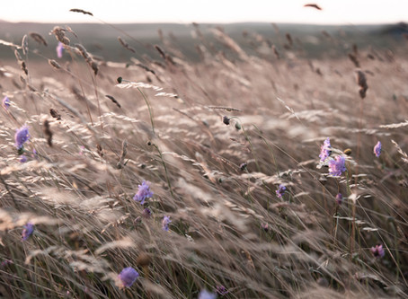 into the fields | 5 tips for photographing wild flowers