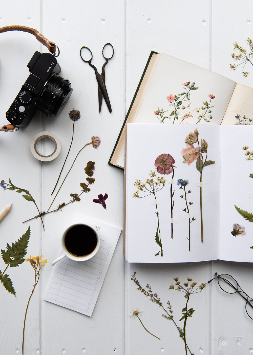pressed flowers on a white table with a Leica d-lux 109, a simple guide to choosing a camera