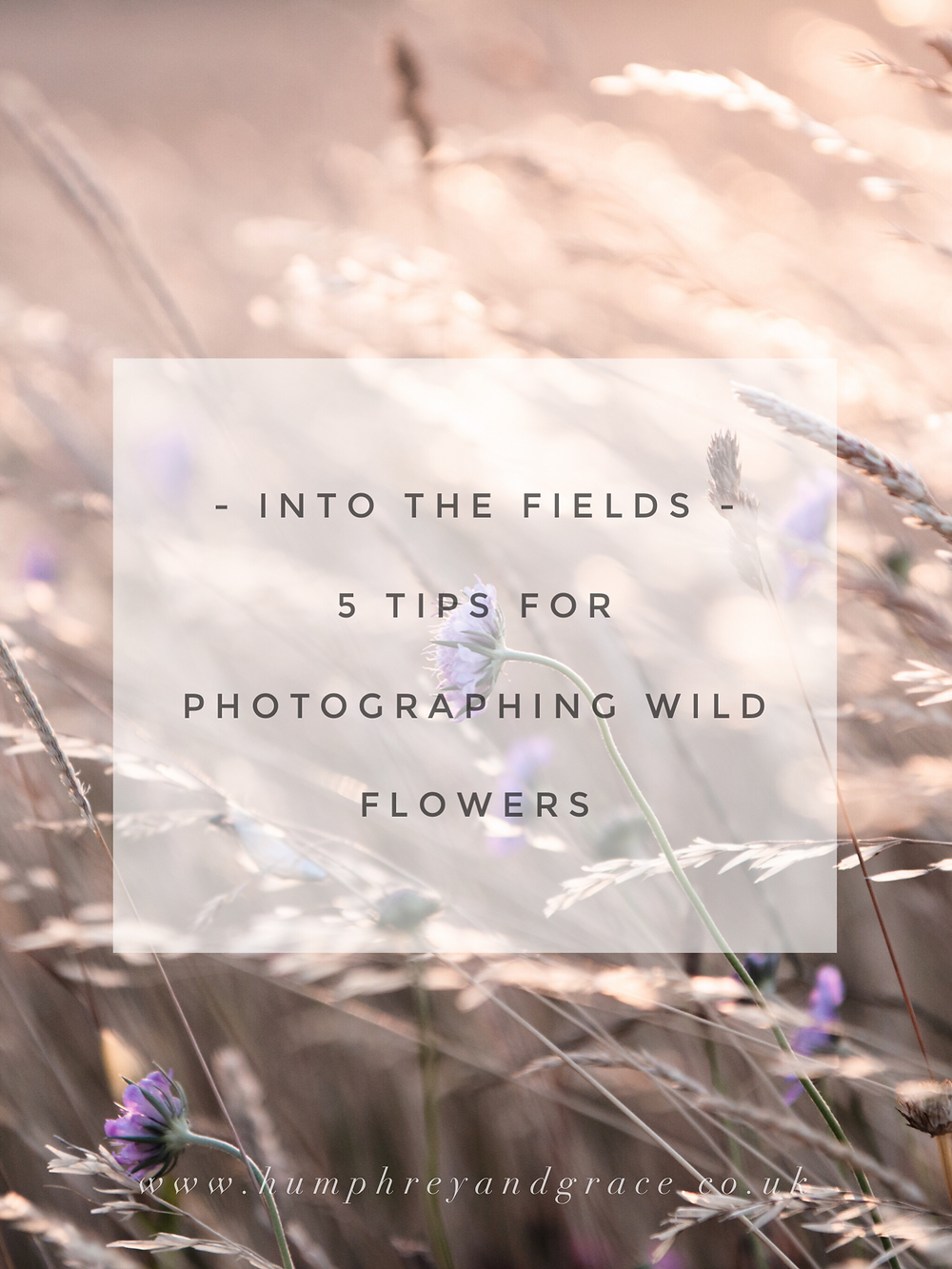 5 tips for photographing wild flowers | humphrey & grace