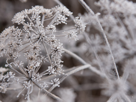 an ode to frost