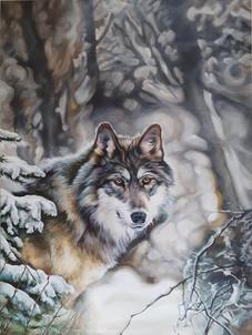 WOLF OF WINTER