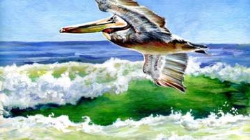Pelican #2a