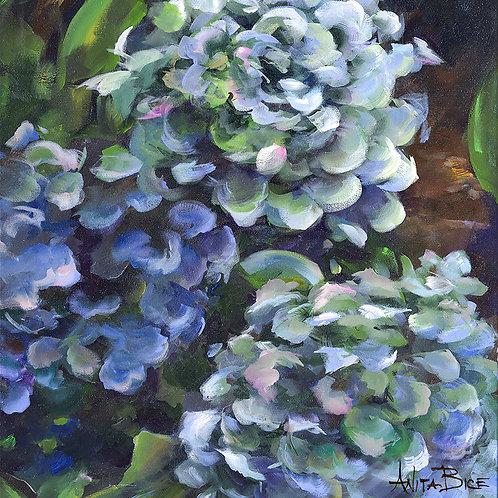 """Blue Hydrangeas_4x4minis"""