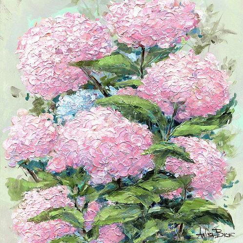 """Hydrangea Pink_4x4minis"""