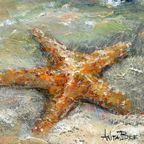 """""""Stan the Starfish_4x4minis"""""""