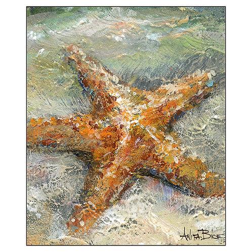 """""""Stan the Starfish"""""""