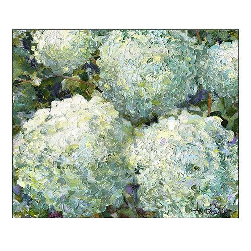 """Hydrangeas Up Close"""