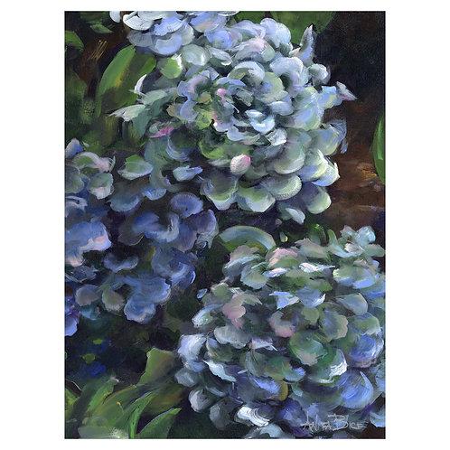 """Blue Hydrangeas - 1"""