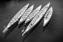 Dragon Boats in Shatin.jpg