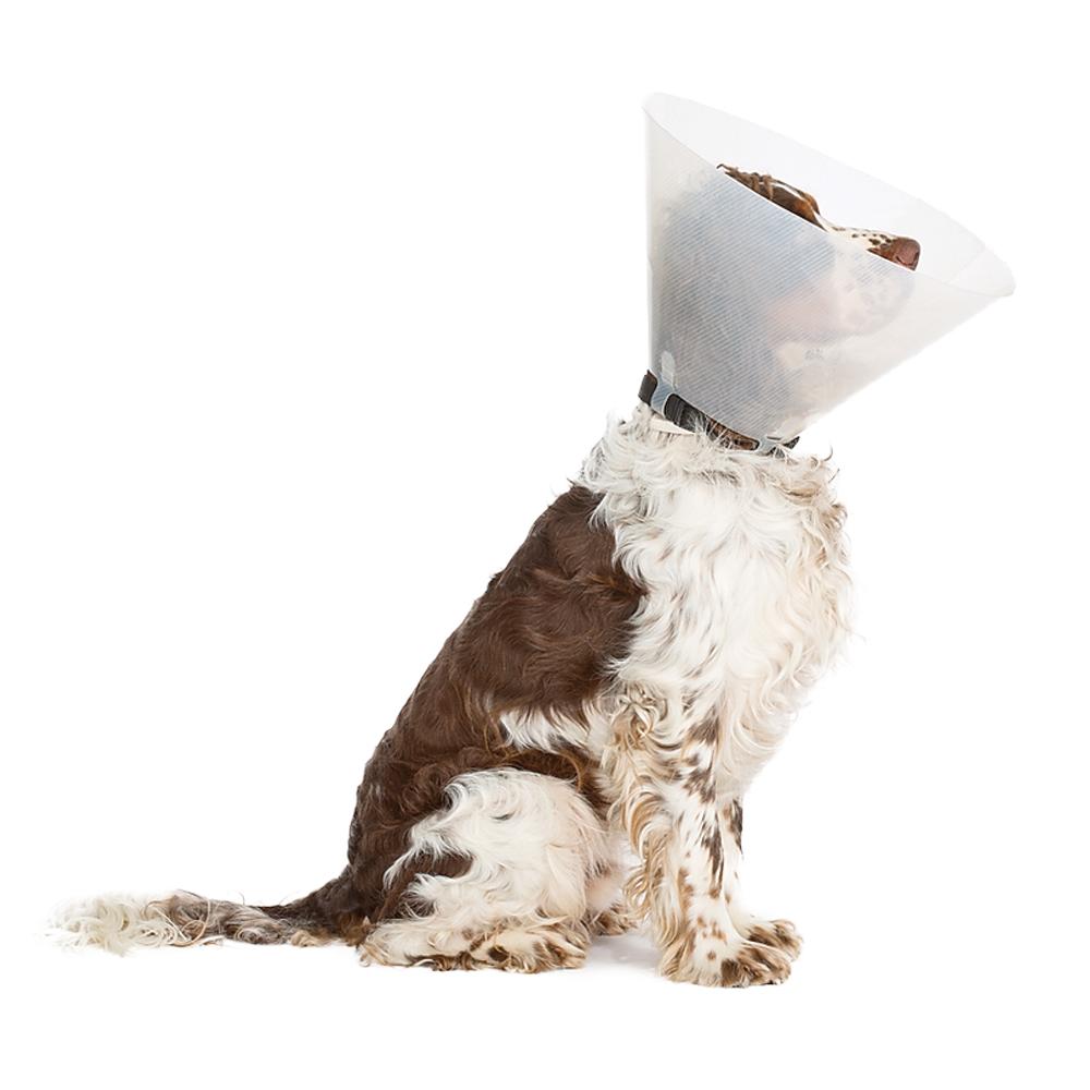 ניתוח כירורגי לכלבים