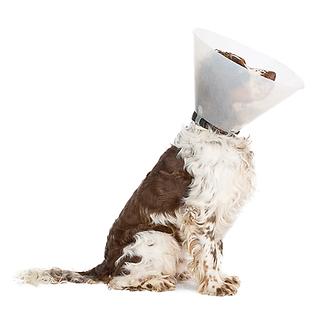 כל מה שאתם צריכים לדעת על ניתוחים בחיות מחמד