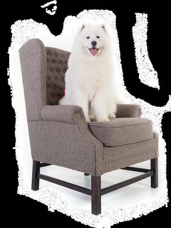 כלב יושב על כורסא