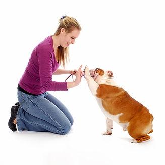 כלבים ופעילות גופנית