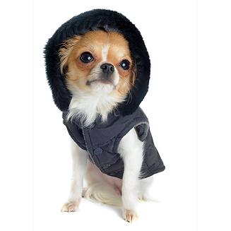 איך מטיילים עם הכלב בחורף?