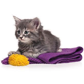 חתול במגפיים