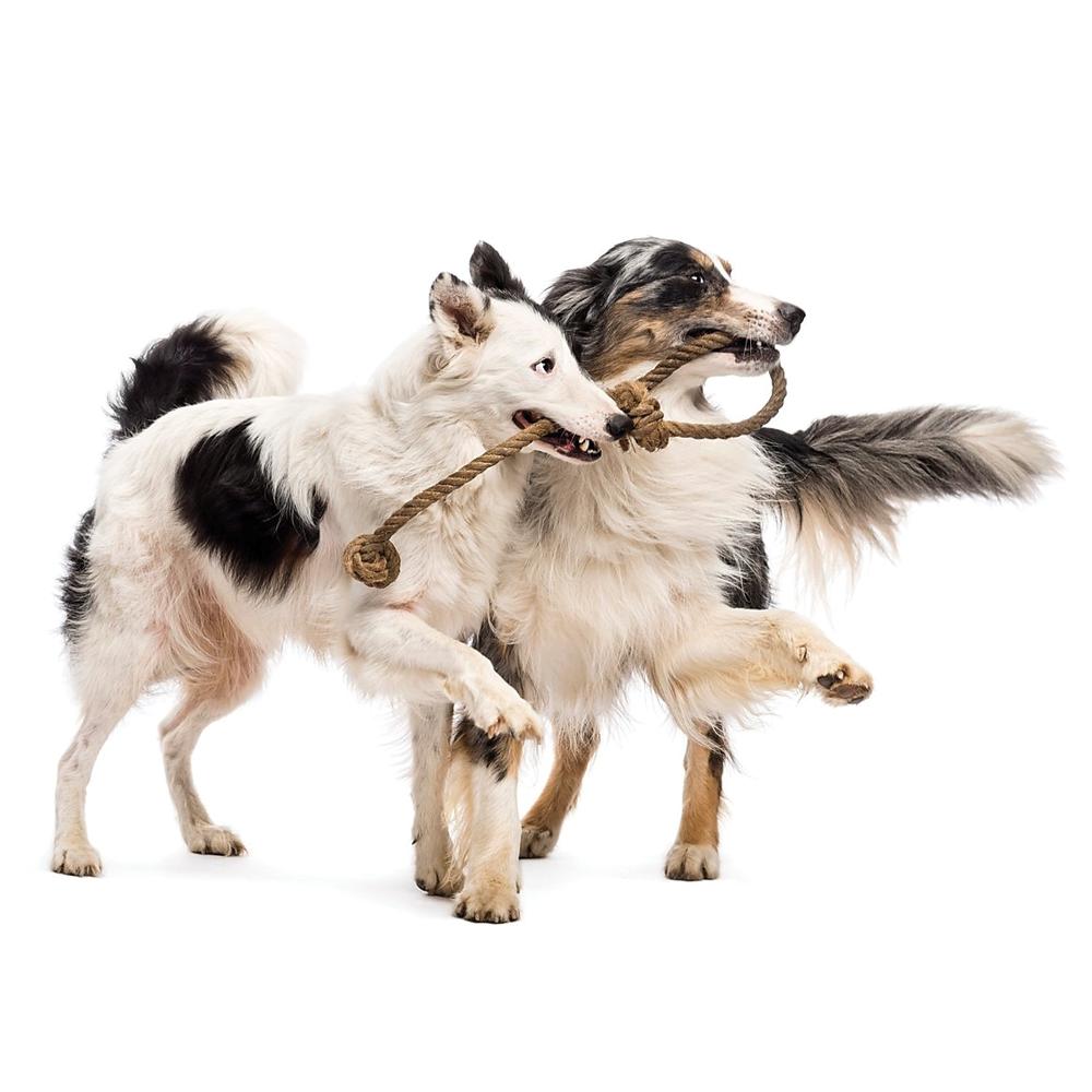 עיקור וסירוס בקרב כלבים