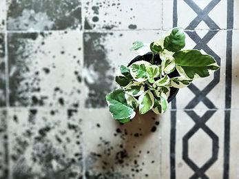 אי ירוק בבניין: חולמים על ''ג'ונגל אורבני'' בבית? המלצות למתחילים