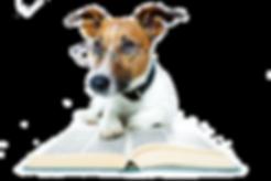 כלב קורא בספר