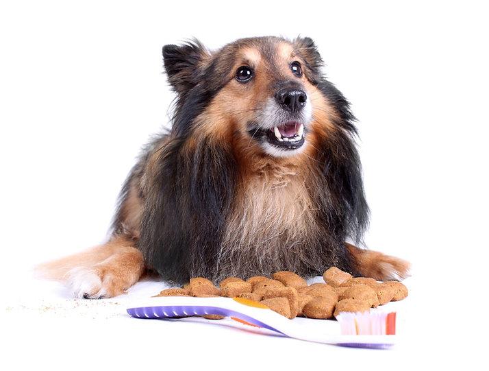 טיפולי שיניים לכלבים וחתולים