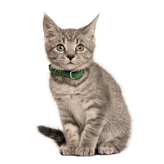 5 טיפים לגידול חתולים מאושרים