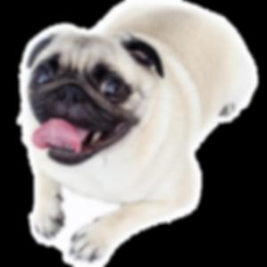 כלב בדף ממליצים