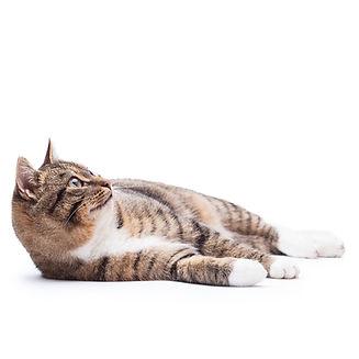 קיץ של חתולים